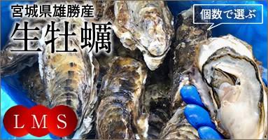 三陸宮城県産 雄勝湾牡蠣