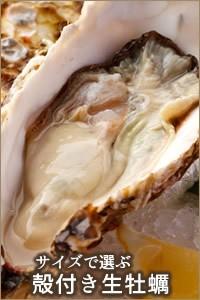 海遊 三陸宮城県石巻 雄勝湾 殻付き生牡蠣