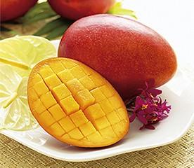 国内産完熟マンゴ 1個入