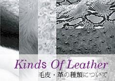 毛皮・革の種類について