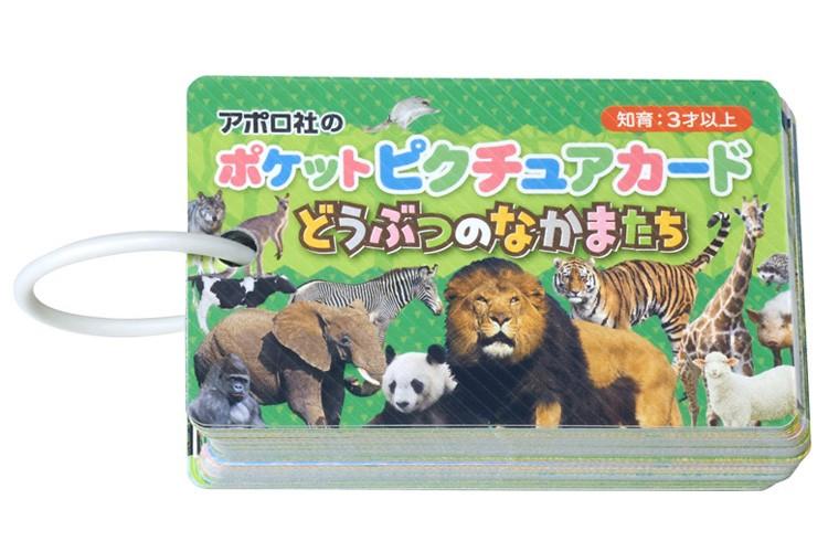 アポロ社 知育玩具 図鑑 おもちゃ ポケットピクチュアカード どうぶつのなかまたち