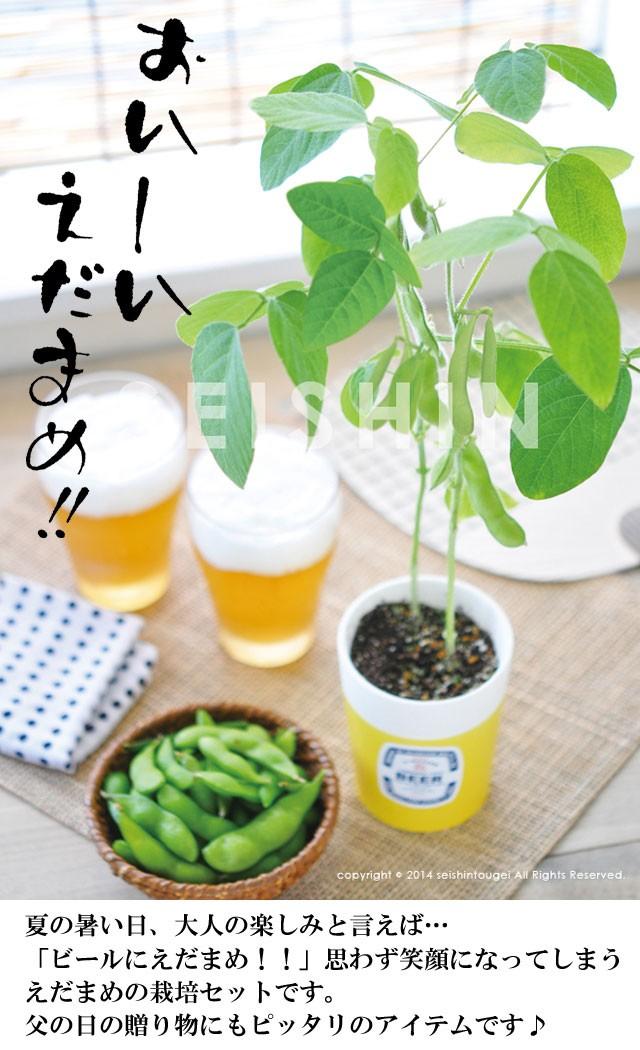 『栽培セット』 えだまめ栽培セット001