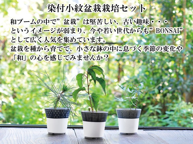 『栽培セット』 染付小紋盆栽栽培セット001