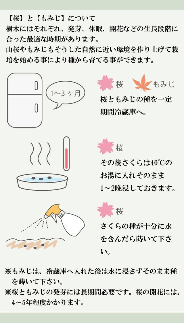『栽培セット』 染付小紋盆栽栽培セット003