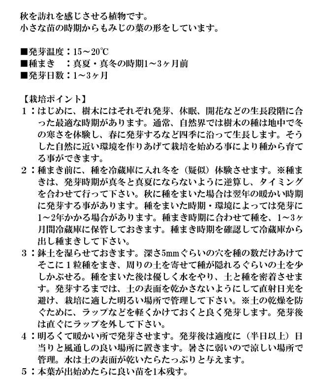 『栽培セット』 染付小紋盆栽栽培セット006-2