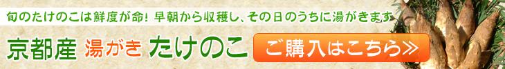 京都・伏見の朝掘りたけのこ ご購入はこちら
