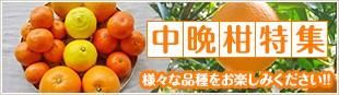 様々な品種をお楽しみください!! 中晩柑特集