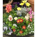 季節の花の寄植・花苗リース