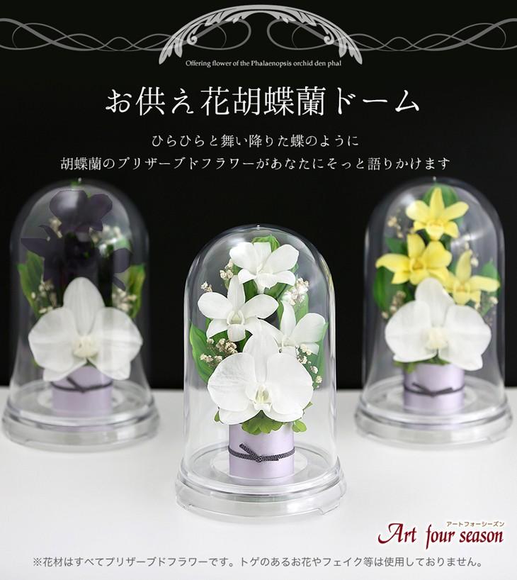 お供え花胡蝶蘭デンファレ