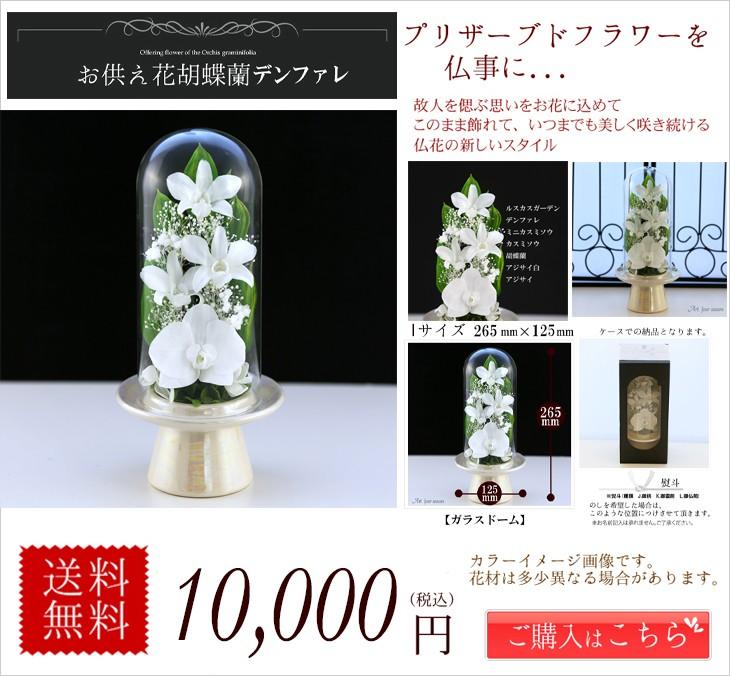 胡蝶蘭Glass