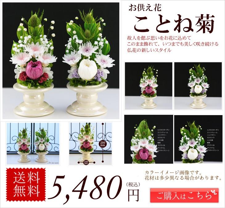 ことね菊Vase