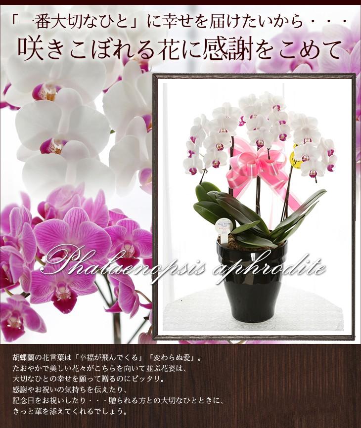 「一番大切なひと」に幸せを届けたいから・・・咲きこぼれる花に感謝をこめて