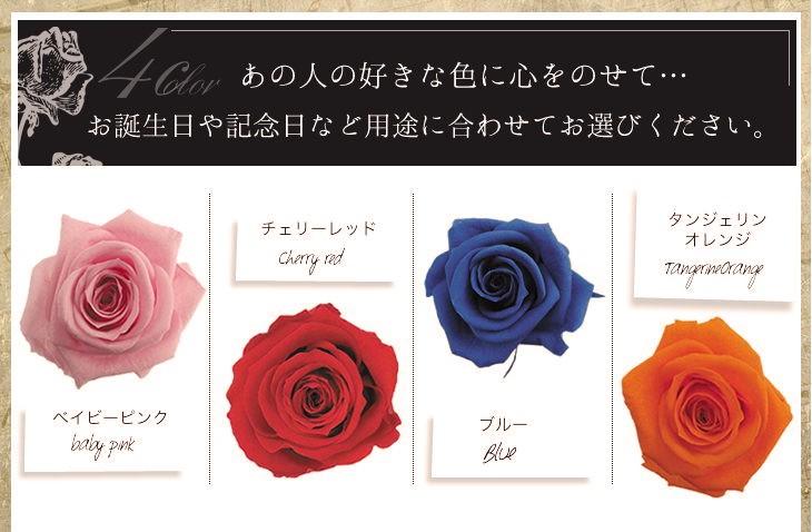 カラー4色 ベイビーピンク チェリーレッド ブルー タンジェリンオレンジ