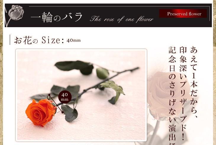 お花のサイズ40mm