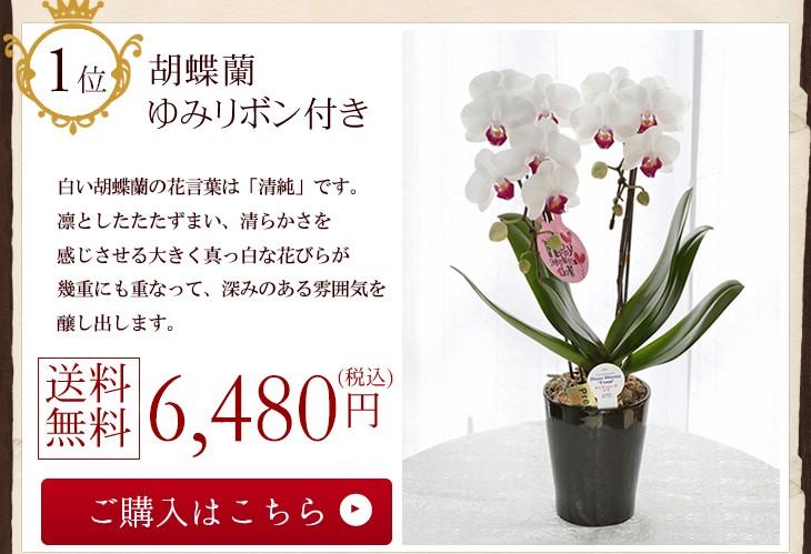 胡蝶蘭ゆみリボンつき6480円