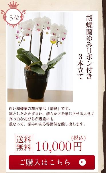 胡蝶蘭ゆみリボン付き3本立て10000円