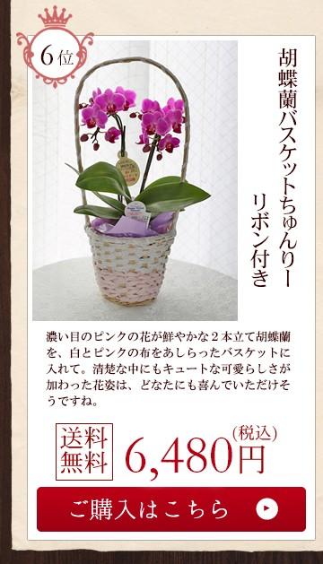 胡蝶蘭バスケットちゅんりーリボン付き6480円