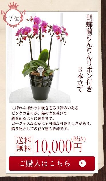 胡蝶蘭りんりんリボン付き3本立て10000円