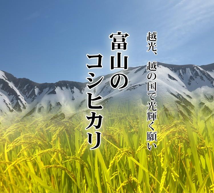 富山のこしひかり