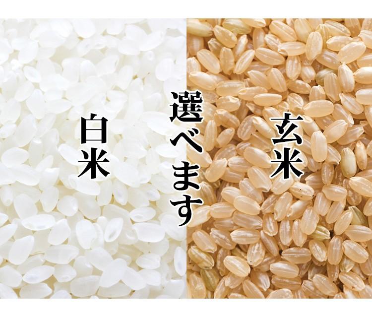 玄米選べます