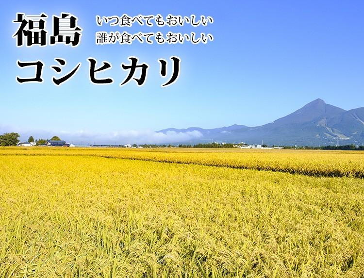 高級米 白米 福島県こしひかり