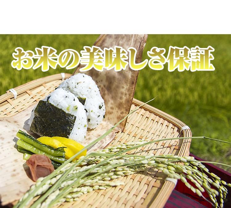 行楽シーズン到来 お弁当やおにぎりにオススメのお米