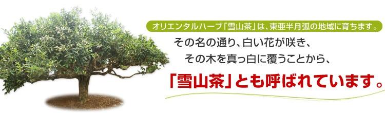 オリエンタルハーブ「雪山茶」は、東亜半月弧の地域に育ちます。