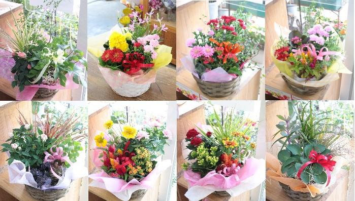 父の日 送別祝い  誕生日 記念 結婚 アレンジフラワー 寄せ鉢 花 プレゼント ギフト 喜寿 米寿