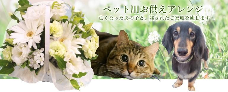 ペットお悔やみ お供え 虹の橋 犬 猫 可愛い アレンジフラワー アグレアーブル花や