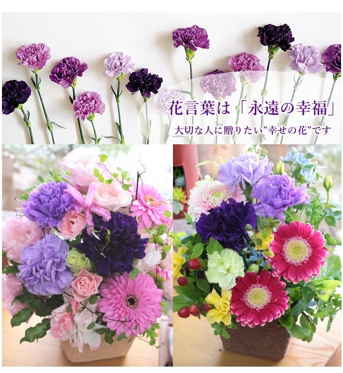 いい夫婦の日 アレンジフラワー ムーンダスト 紫カーネーション 誕生日 記念 結婚 女性 花 プレゼント ギフト お祝い アグレアーブル花や