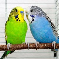 鳥のエサ・用品カテゴリ