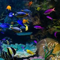鑑賞魚カテゴリ
