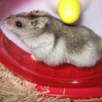小動物のエサ・用品カテゴリ