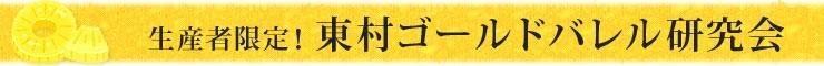生産者限定 東村ゴールドバレル研究会