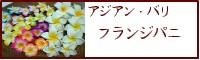 【アジアン・バリ】フランジパニ