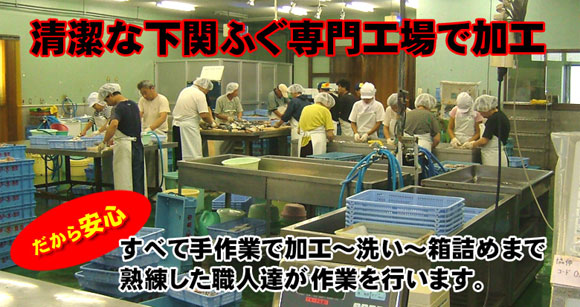 清潔なふぐ専門工場で加工!ふぐの加工は熟練の職人が加工するから安心です。