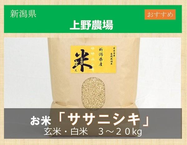 お米 ササニシキ