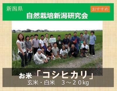 新潟の自然栽培米「コシヒカリ」
