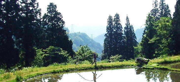 山の上の田んぼ