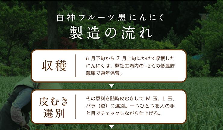 白神フルーツ黒にんにく 製造の流れ 収穫 6月下旬から7月上旬にかけて収穫したにんにくは、弊社工場内の-2℃の低温貯蔵庫で通年保管。 → 皮むき選別 その原料を随時皮むきしてM玉、L玉、バラ(粒)に選別。一つひとつを人の手と目でチェックしながら仕上げる。