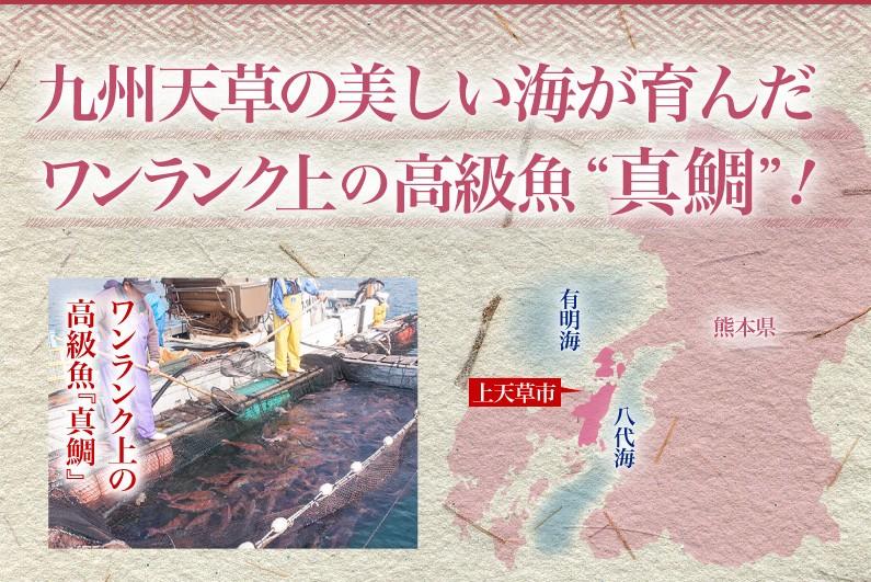 九州天草の美しい海が育んだワンランク上の高級魚真鯛!