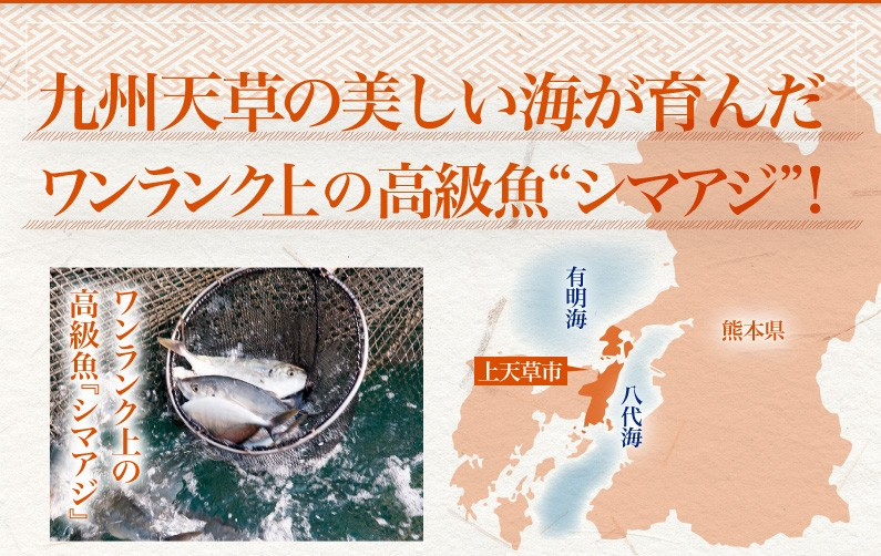 九州天草の美しい海が育んだワンランク上の高級魚シマアジ!