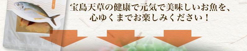 宝島天草の健康で元気で美味しいお魚を、心ゆくまでお楽しみください!