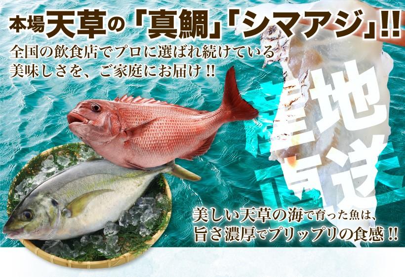 本場天草の「真鯛」「シマアジ」!!全国の飲食店でプロに選ばれ続けいる 美味しさを、ご家庭にお届け!! 美しい天草の海で育った魚は、旨さ濃厚でプリップリの食感!!