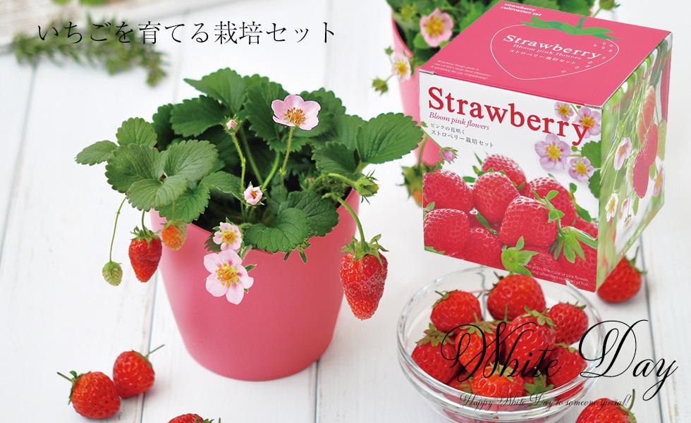 ストロベリー栽培セット