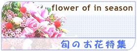 旬のお花特集