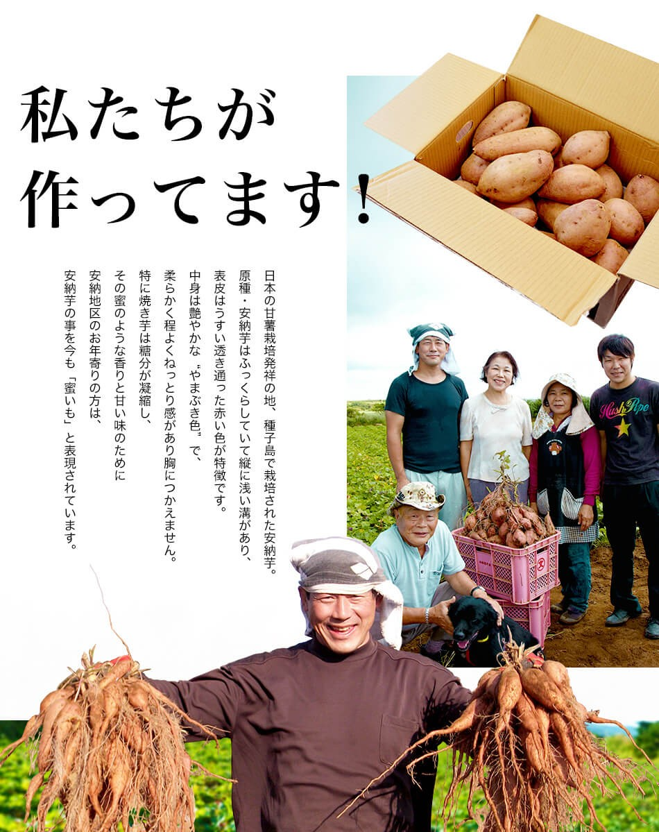 種子島産安納芋(安納さげいも)