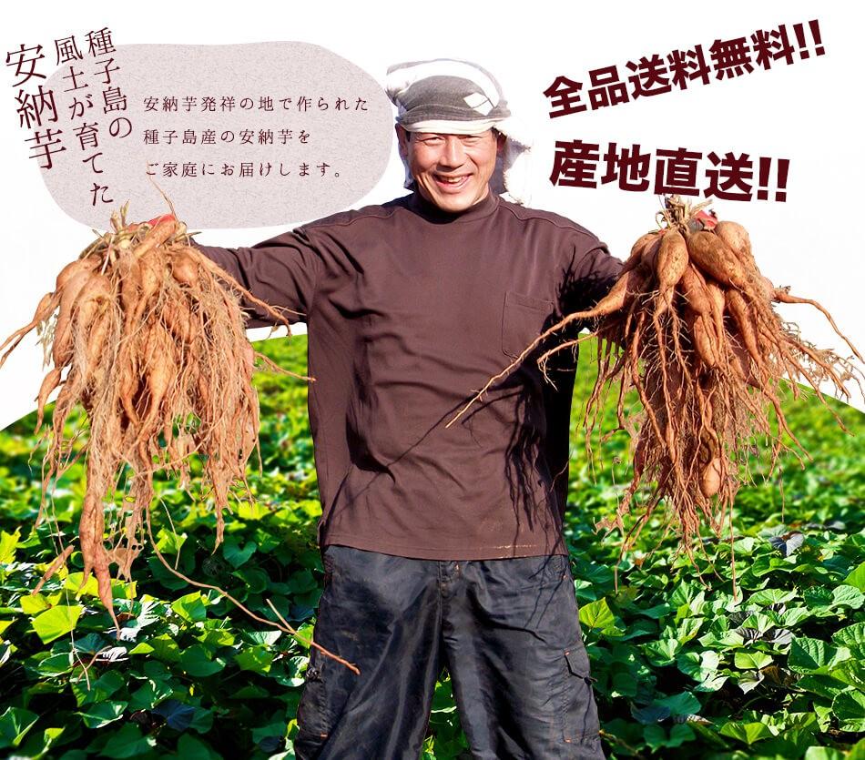 安納芋発祥の地で作られた種子島産の安納芋をご家庭にお届けします。