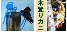 「木登りガニ」 枝打ち 安養寺