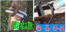 木の皮むき 杉ヒノキの皮削り鎌